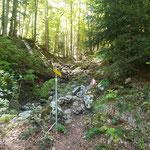 Abzweigung von der Forststraße auf einen Waldpfad