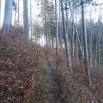Nachdem wir die Forststraße verlassen hatten, ging es durch den Wald das letzte Stück weit zum Ochsenkogel Gipfel