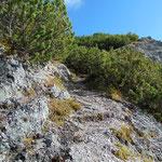 Durch die Latschen geht es die letzten Meter bis zum Gipfel