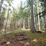 Teilweise steiler Wegverlauf durch den Wald