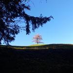 Der Gipfelbaum ist in Sicht