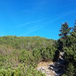 Zwischen den Latschen ist schon das Gipfelkreuz des Ahornkogels zu erkennen - besuchen werden wir diesen aber erst am Rückweg