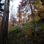 Über einen Waldpfad geht es weiter zu den beiden Gipfeln