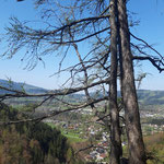 Blick auf Scharnstein