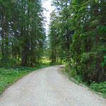 Zu Beginn geht es das erste Stück lang entlang der Forststraße