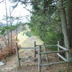 Über den Waldpfad nach dem Zwölferhorn Gipfel zur Forststraße