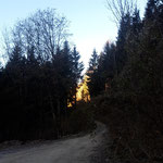 Ein Stück lang geht es entlang der Forststraße