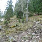 Wegverlauf durch den Wald