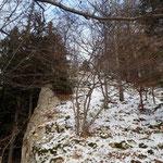 Durch den Wald geht es weiter Richtung Gipfel