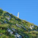 Letzter Anstieg zur Madonna am Gipfel der Spinnerin