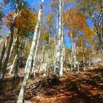 Erster Abschnitt durch den Wald