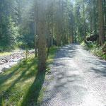 Wegverlauf über die Forststraße
