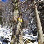 Noch 200 Höhenmeter von der Märchenwiese zum Prielschutzhaus