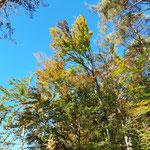 Tipp: Tour im Herbst