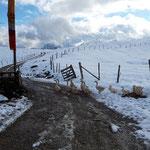 Am Weg zur Schafbergblickhütte treffen wir auf eine Gruppe Gänse