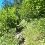 Schmaler Waldpfad nach oben