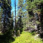 Durch den Rauriser Urwald