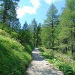 Ist das Plateau kurz vor dem Tappenkarsee erreicht, verläuft der Weg weitgehend flach durch diesen idyllischen Wald