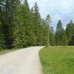 Allerdings dauert dieser Wegabschnitt nur kurz, gleich wenden wir uns in den Wald