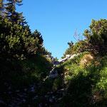 Durch einen kleinen Waldpfad in Richtung Gipfel