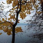 Herbstfarben soweit das Auge reicht