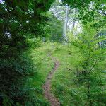 Der Wegverlauf wird immer idyllischer, je näher der Gipfel rückt