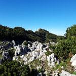 Felsen und Latschenwälder am Weg zum Gipfel