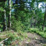 Hier beginnt der Weg durch den Wald ganz schön steil zu werden