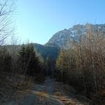 Ein Stück folgen wir noch der Forststraße, bevor der Jägersteig abzweigt