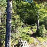 Gipfelbereich des Radingbergs