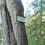 Der weitere Weg zur Welser Hütte ist überschaubar