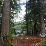 Waldiger Gipfelbereich