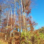 Der goldene Herbst erstrahlt in seiner ganzen Pracht