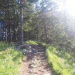 Über gemütliche Waldwege geht es aufwärts