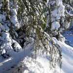 Hier geht es durch den tiefer werdenden Schnee