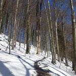 Weiter geht's durch den Wald