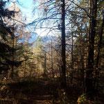Los geht's über den ersten Waldpfad