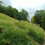 Einstieg - über eine Wildblumenwiese