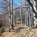 Danach geht es wieder in den Wald und es beginnt der Schutzengelweg