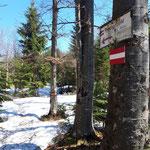 Wegverlauf durch den letzten Waldabschnitt