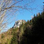 Blick von der Forststraße auf den Gipfel