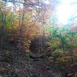 und schließlich tauchen wir wieder in den golden verfärbten Wald ein