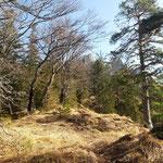 Dieser Waldrücken führt zum letzten Gipfelanstieg, im Hintergrund ist schon das Föhrengrabeneck zu sehen