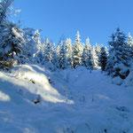 Weiter durch den tief verschneiten Wald