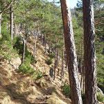 Als nächstes geht es durch einen Waldabschnitt