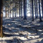 Letzter Anstieg durch den Wald vor der Grünburger Hütte