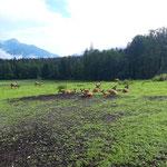 Vorbei am Wildgehege beim Almgasthof Baumschlagerreith