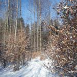 Herunten lag noch nicht allzu viel Schnee am Weg