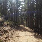 Nach dem Ende der Forststraße geht es weiter über einen Waldweg