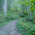 Wegverlauf zu Beginn durch den Wald